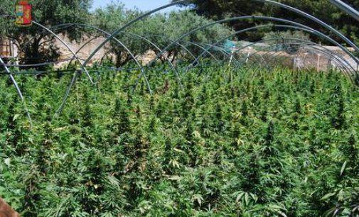 Droga: sequestrate nella Marsica 6 tonnellate di marijuana