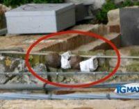 Allarme bomba a Lanciano, evacuati uffici comunali