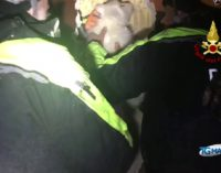 A Rigopiano i Vigili del fuoco salvano i cuccioli di Lupo e Nuvola, le immagini