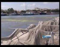 Dragaggio, le proposte di Wwf e pescatori