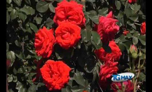 Due giorni dedicati alle rose