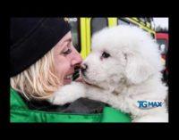 Salvati i cuccioli di Rigopiano, figli di Lupo e Nuvola