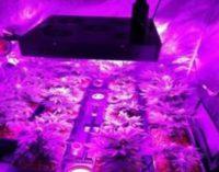 """<div class=""""dashicons dashicons-camera""""></div>Coltivava marijuana nella serra in mansarda, arrestato. Il raccolto avrebbe fruttato 5 chilogrammi di sostanza stupefacente"""