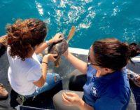 "<div class=""dashicons dashicons-camera""></div>Rilasciate a Ortona quattro tartarughe marine Caretta caretta"