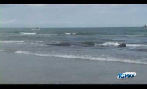 """<div class=""""dashicons dashicons-video-alt3""""></div>Tre anni dopo Vasto ricorda lo spiaggiamento dei capodogli a Punta Aderci"""