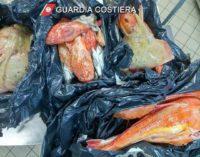 """<div class=""""dashicons dashicons-camera""""></div>Pesca illegale, Guardia costiera sequestra 36 kg di specie pregiate"""