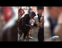 """<div class=""""dashicons dashicons-video-alt3""""></div>Cani si azzannano alla fiera degli ambulanti a Lanciano tra gli stand di piazza Plebiscito"""