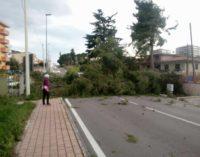 Lanciano: alberi abbattuti dal vento che soffia a 80 km/h, paura in via per Fossacesia e Santo Spirito