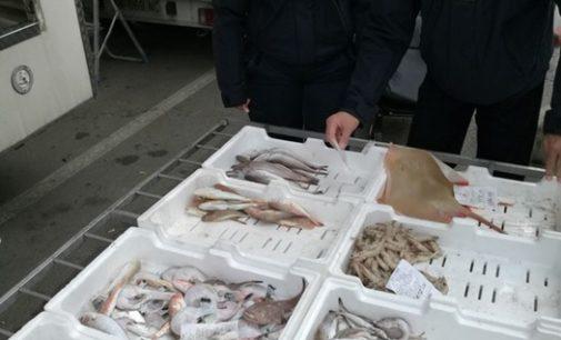 Capodanno: controlli sulla filiera della pesca