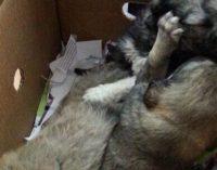 Quattro cuccioli di cane salvati su A/14 dalla Polstrada