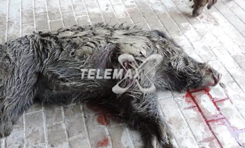Sant'Eusanio del Sangro: selecontrollore denunciato per caccia abusiva