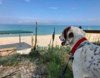 Fido può andare in vacanza a Pineto, è pronta la spiaggia per i cani
