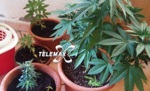 Treglio: coltivavano piante di marijuana in casa, denunciati fratello e sorella