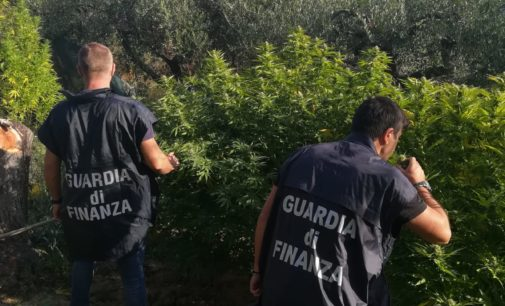 Armi e droga, un arresto a Vasto