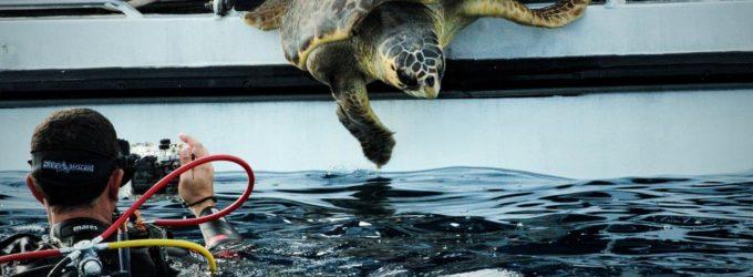In memoria di Ludovica Filippone, rilasciata in mare la tartaruga Lully