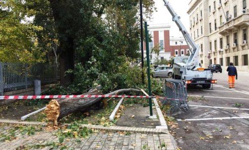 Vento forte a Pescara: albero si abbatte su auto, donna finisce in ospedale col femore rotto