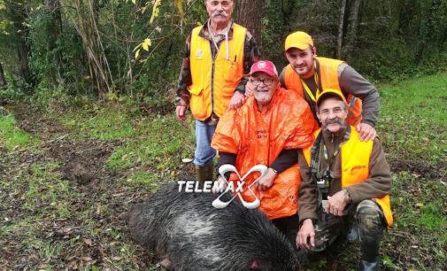 Cinghiale record nel Chietino, catturato ad Ari esemplare da 220 kg