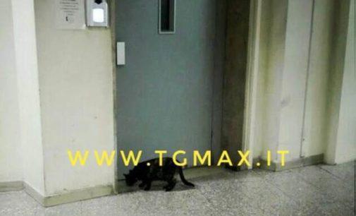 Lanciano: c'è un gatto in ospedale