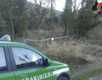 Taglio dei boschi e furto aggravato di legname, sanzioni della Forestale di Chieti