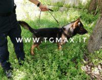 Droga da Pescara a Guardiagrele, sgretolato fortino dello spaccio con arresti e perquisizioni