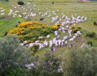 Mafia dei pascoli, la denuncia in Abruzzo con un esposto alla Guardia di Finanza