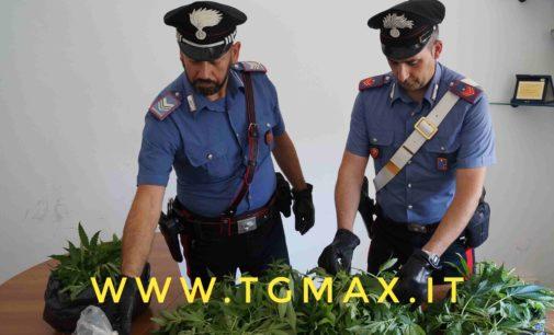 Torricella Peligna: come l'erba di Grace, ma scatta il sequestro con arresto