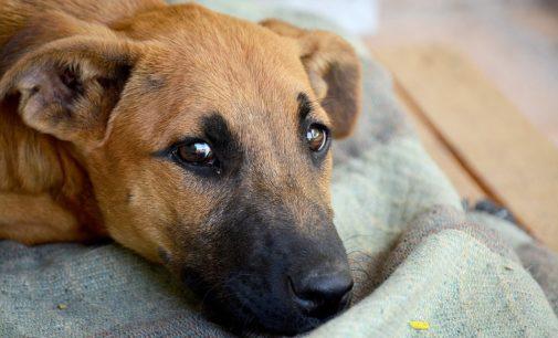 Ortona: abbandona il cane ma viene scoperto e denunciato