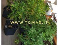 Aveva una serra di piante di marijuana in casa, denunciato a Santa Maria Imbaro