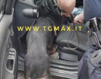 Droga, corriere marocchino di Roccascalegna arrestato sulla fondovalle Sangro
