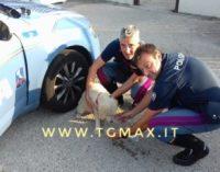 Cucciolo di pastore abruzzese abbandonato in autostrada: salvato dai poliziotti, adesso è al canile