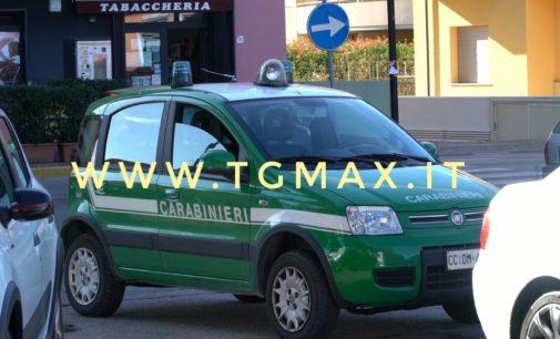 Lanciano, i carabinieri forestali fermano il taglio di 14 alberi di cedro