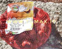 Coldiretti: raccolto in calo del 30 per cento per le castagne italiane, colpa di un insetto cinese