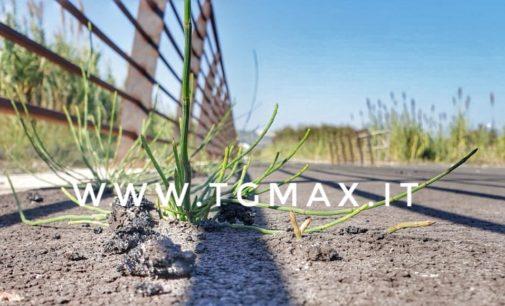 Via Verde, nuove piante infestanti spuntano dall'asfalto nero