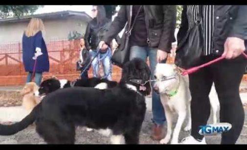 Lanciano: Amici a 6 zampe chiedono un'area sgambamento al Central park