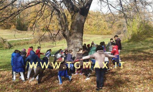 È a Pizzoferrato l'albero di sorbo più grande d'Italia