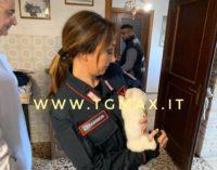 Canile lager a San Vito Chietino, 4 denunce per maltrattamento animali