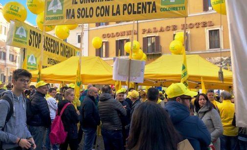 Coldiretti protesta davanti a Montecitorio: il cinghiale ci piace solo con la polenta