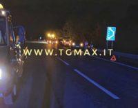 Cinghiale provoca incidente stradale sulla fondovalle Sangro, coinvolte due auto