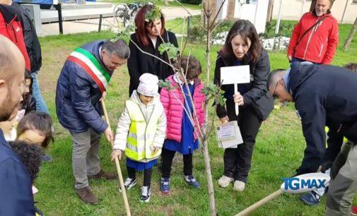 Lanciano nel 2020 avrà più alberi, una voce dedicata nel prossimo bilancio del Comune