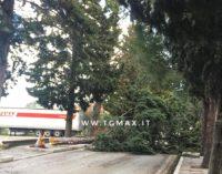 Viale San Giovanni in Venere, la Provincia di Chieti abbatte 29 cipressi