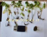 Archi: 49enne denunciato per droga dai carabinieri di Atessa