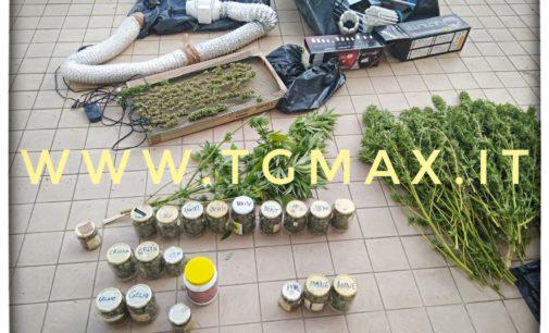 Lanciano: coltivava serra di cannabis in cantina, operaio arrestato a Colle Pizzuto