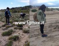 Casalbordino: Soa denuncia, distrutta la camomilla delle dune