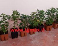 Lanciano: operaio con 2 serre di marijuana in casa, scoperto e denunciato dai carabinieri di Atessa