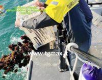 San Vito Chietino: pesca illegale di ricci di mare, denunciati due pugliesi