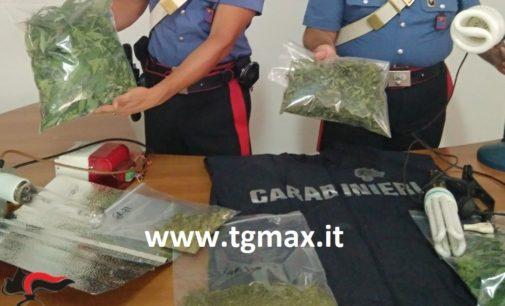 Sant'Eusanio del Sangro: coltivava marijuana in soffitta, arrestato disoccupato